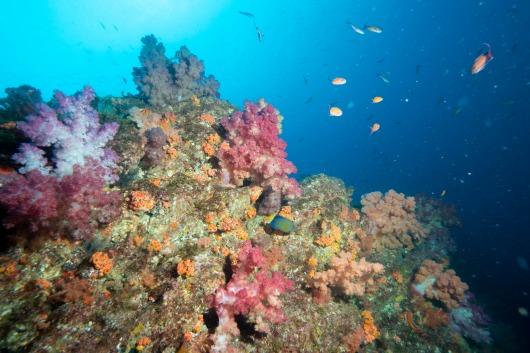 沖ノ島でダイビング