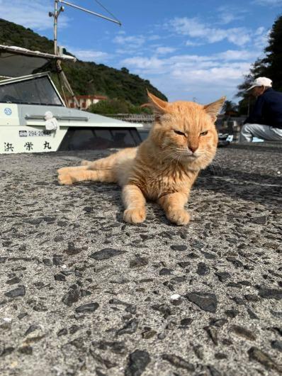 ダイビングと猫