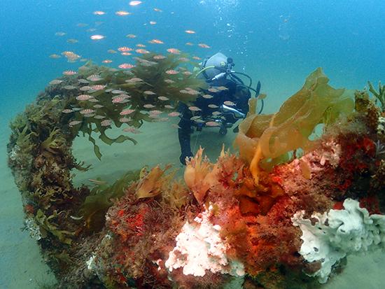 久しぶりの錨→沖の瀬ダイビング