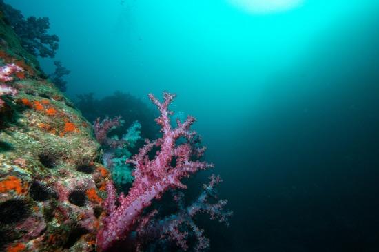 硫黄島でダイビング