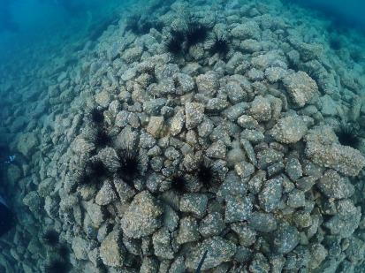 9月13日 青海島でダイビング