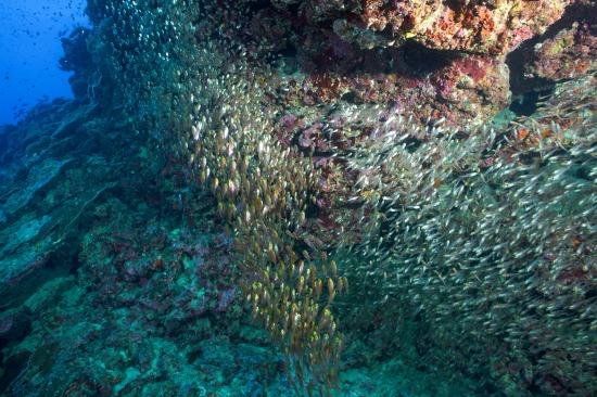 沖縄本島でダイビング