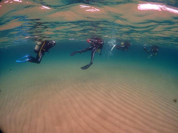 6月12日鐘崎でダイビング